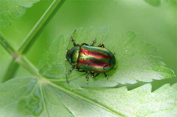 Ciclo De Vida De Los Insectos